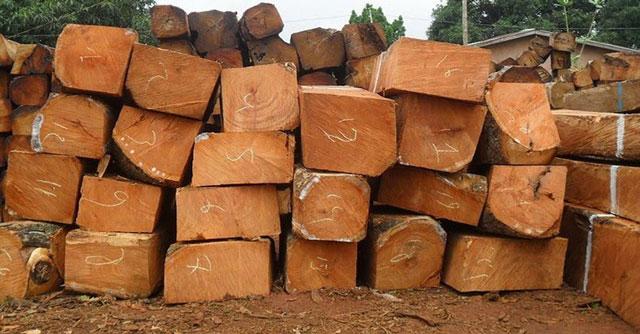 Phân loại gỗ gụ